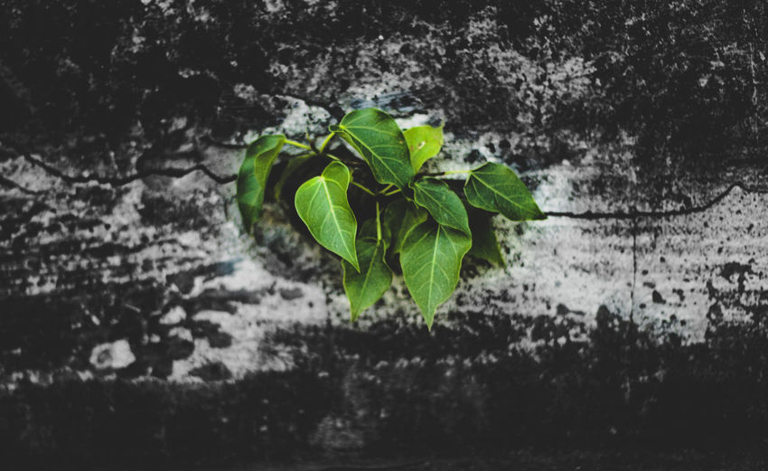 Architecture Beauty In Nature Close-up Day Fragility Freshness Green Color Growth Leaf Leaves Nature No People Outdoors Plant Plant Part Plant Stem Selective Focus Vulnerability  Wall - Building Feature Water