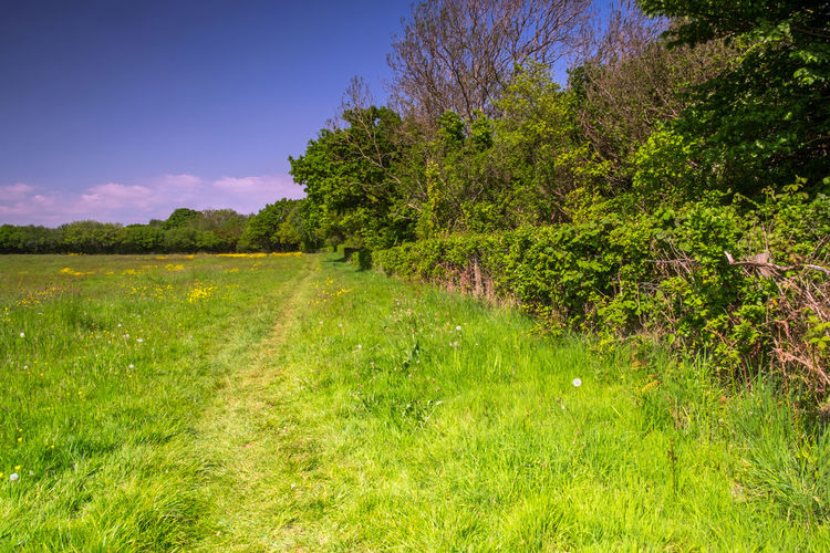 English Countryside Forest Path Forest Walk Grass Green Meadow Flowers Trees Woodland Walks Beautiful Forest Beauty In Nature Day Fields Forest Forest Pathway Gorgeous Woodlands Landscape Meadow Nature No People Outdoors Scenics Summer Meadow Tranquil Scene Tree Woodlands
