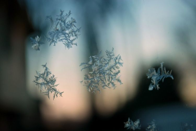 Backgrounds Close-up Cold Cold Temperature Focus On Foreground Fragility Frosted Glass Frozen Ice Ice Crystal No People Snowflake Window Winter