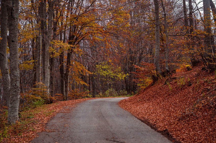 Exploring the little mountain town of Krushevo in Macedonia Asphalt Autumn Beauty In Nature Day Forest Leaf Nature No People Outdoors Road Rural Scene Scenics Single Lane Road The Way Forward Tranquil Scene Tree WoodLand Yellow