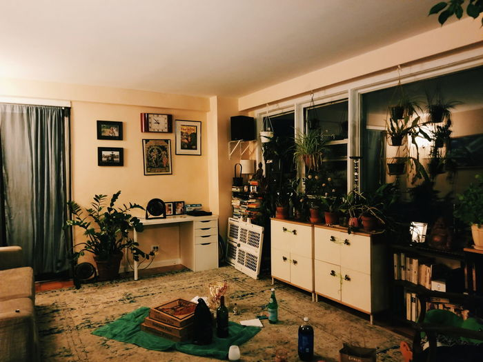 A Hipsters Dream Flowers Cactus Fluorescent Cacti Plants Greenhouse Succulents Plantlovers Orchids NYC Flower Aesthetic Love NY Plantlove Wine Urbanjungle Houseplants Home Pizza Greenery Games Apartment Homedecor Hanging Plant Colorful Hipster Brooklyn Domestic Room Door Built Structure