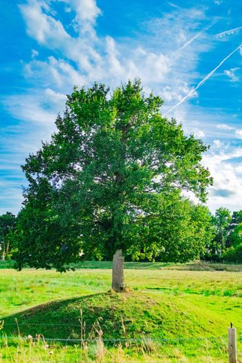 tree on city Plant Tree Sky Nature Green Color Cloud - Sky Growth Beauty In Nature Tranquil Scene First Eyeem Photo