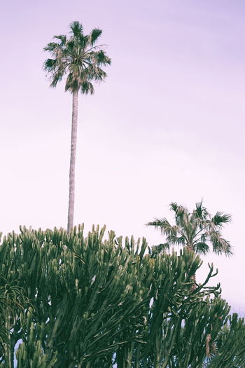 Plant Nature Growth Sky No People Tree Palm Tree Beauty In Nature Outdoors Flower Day Flowering Plant Tropical Climate Green Color Tall - High Freshness Cactus Go Higher
