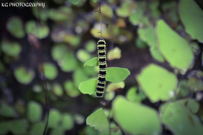 Worm Insect Photography Macro Photography Nature go green......! Go Green