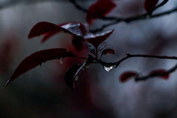 雨下小蝇raining