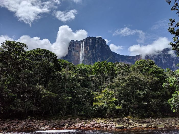 Tree Plant Sky Scenics - Nature Beauty In Nature Cloud - Sky Nature Land Day Growth No People Tranquil Scene Mountain Forest Non-urban Scene Environment Rock Outdoors Landscape Mountain Peak Formation Canaima Angelfalls Angelfall Venezuela