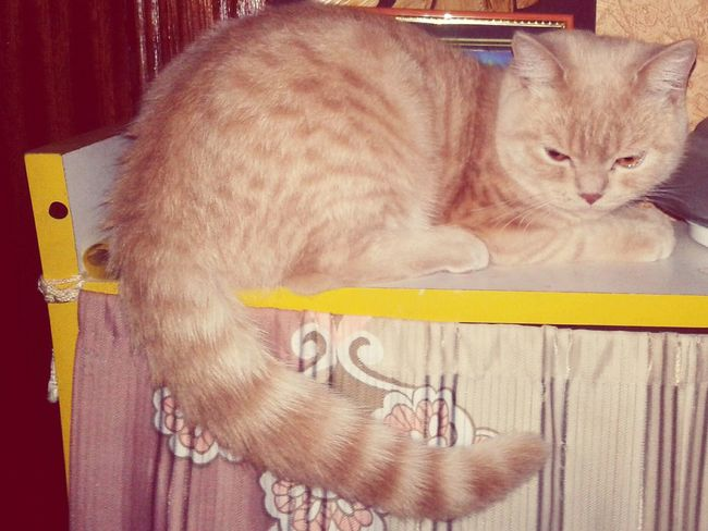 Котик милота Соня First Eyeem Photo