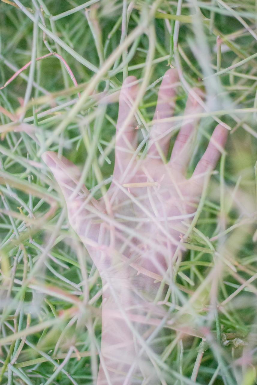 Close-Up Of Cropped Hand Amidst Plants