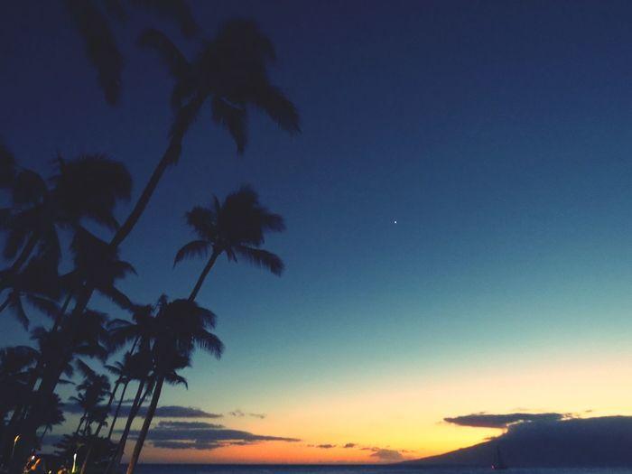 Hawaii Honolulu  Honolulu, Hawaii Traveling Travel Photography EyeEm Gallery Beach Eye4photography  Coconut Trees Sunset