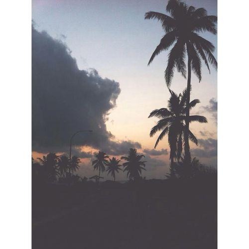 Coconut Trees Sunset Christmasisland