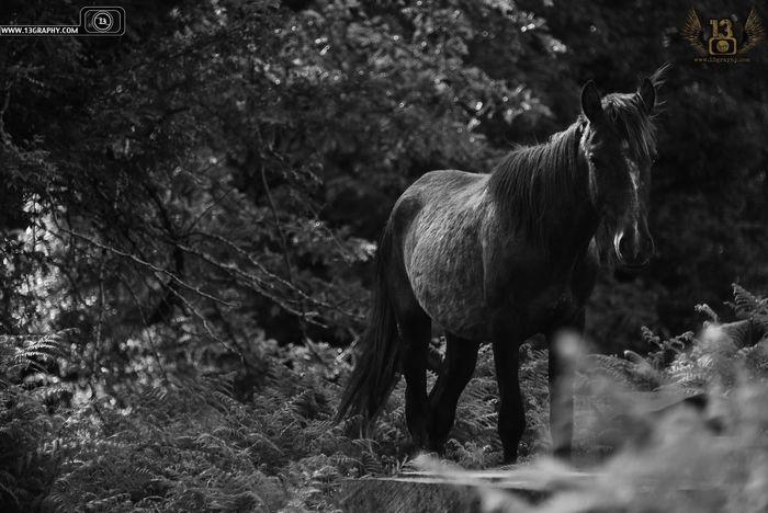 Blackandwhite Black And White Black & White Monochrome Landscape Landscape_Collection Animals Animal Horse Horses