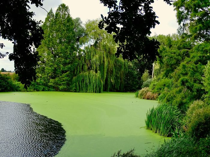 Lake with green