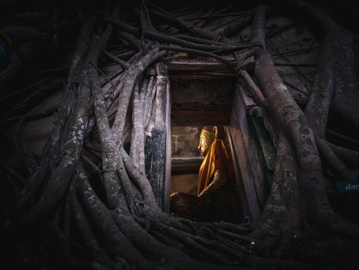 Low Angle View Of Buddha Statue Seen Through Doorway Amidst Roots