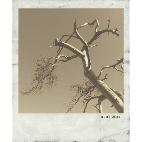 Mob Fiction Polamatic EyeEm Best Shots Landscape_Collection