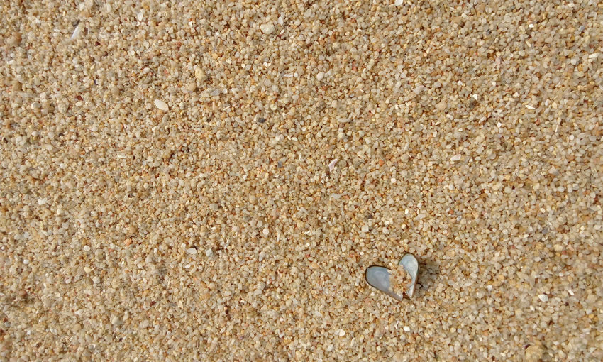 Sand Shell