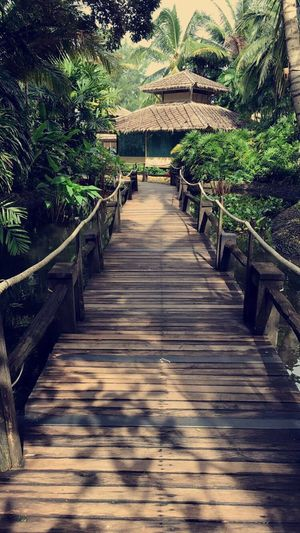 House The Way Forward Direction Plant Tree Railing Nature Day No People Bridge Outdoors Beauty In Nature Architecture Wood - Material Footbridge Connection Sunlight