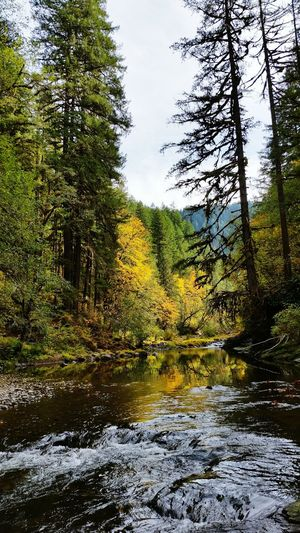 River Water Autumn Autumn Colors Trees Pacific Northwest  Oregon Mountains Stream Flowing Water Forest Reflection