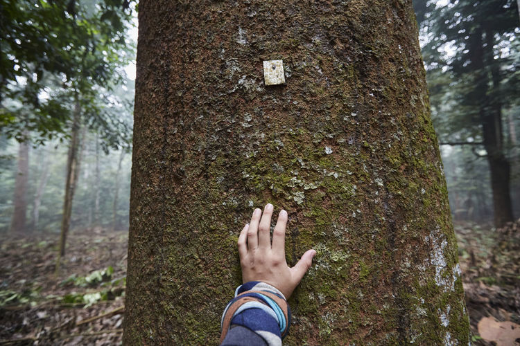 Low section of person against tree trunk in forest