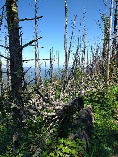 Mount Mitchell Hiking Trees Mountain View