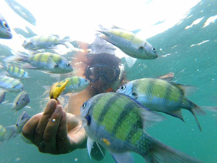 Railey Railey Beach Thailand Snorkeling Snorkel Fish Banana Human Hand UnderSea Water Swimming Underwater Palm Sea Life Sea Close-up Sky