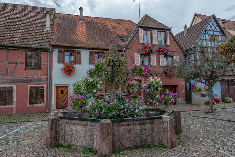 Old town in Alsace, Bergheim, Haut-Rhin. Alsace Alsace France France France Photos France Trip Haut-Rhin Old Town Architecture Bergheim Building Building Exterior Built Structure City Cloud - Sky Day Flower Flowering Plant Growth House Nature No People Outdoors Plant Potted Plant Residential District Sky Tree Window