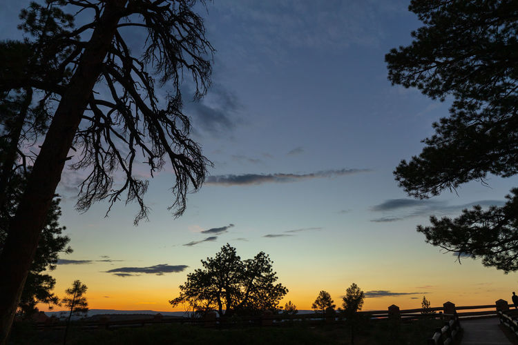 overwhelming sunrise impressions Tree Sky Plant Sunset Scenics - Nature Beauty In Nature Nature Cloud - Sky Tranquility Tranquil Scene No People Non-urban Scene Silhouette Growth Branch Orange Color Outdoors Idyllic Environment Field Bryce Canyon USA