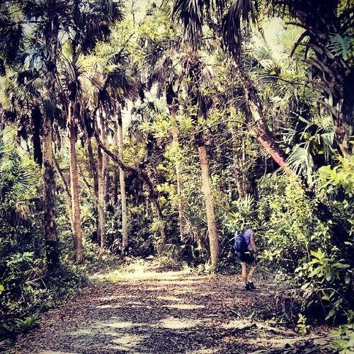 On the Hammock Trail @crewtrust changing into Jungle! Naturewalks Hikingtrail Florida