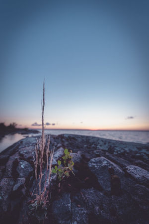 Stand proud. Sky Sunset Blue Scenics Landscape Nature Tranquility Tranquil Scene Sea Outdoors No People Beauty In Nature Water Travel Destinations Beach Clear Sky Horizon Over Water Night Plant Serenity Sweden Growth Flower Non-urban Scene Beauty In Nature