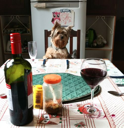 Lunch time Dog Lunch Pet Portraits Lunch Time! Yorkshire Petlovers Eyeem Market Animal Meal PetFood This Is Family Wineglass Alcohol Drink Wine Drinking Glass Table Served Wine Bottle Rose Wine Red Wine