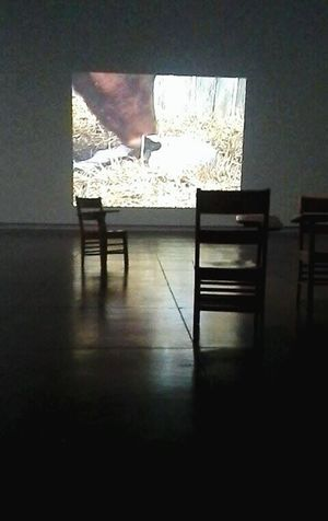 In a big empty room full of chairs Art Gallery Animals Emptyness Art Videos Farm Wildlife Wildlife & Nature Empty Chairs