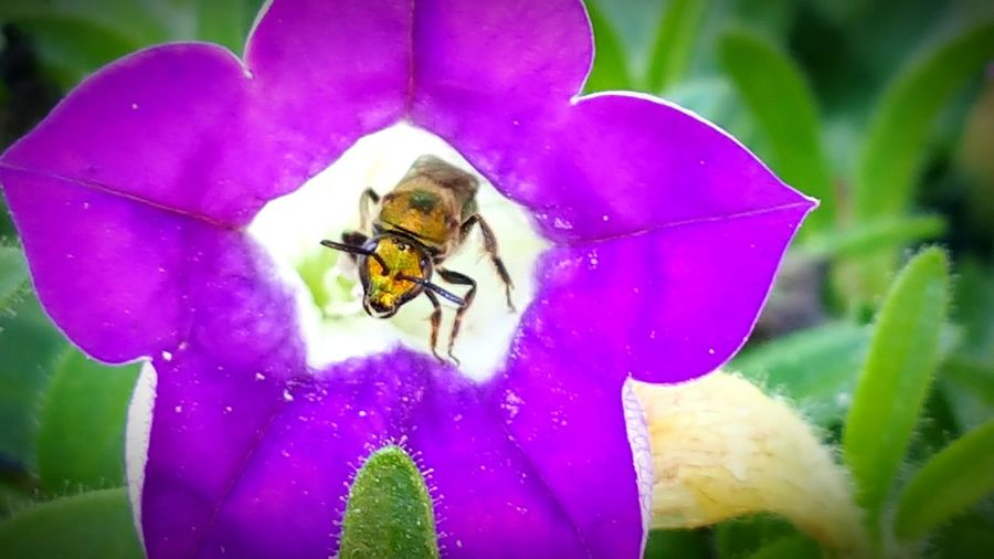 Taking Photos Bee Collecting Pollen Nature On Your Doorstep Natureporn Nature Is Art Week Of Eyeem Overlooked Beauty Different Perspective From My Point Of View Fresh On Eyeem  Tennessee Nature_collection Unseen World Purple Flower