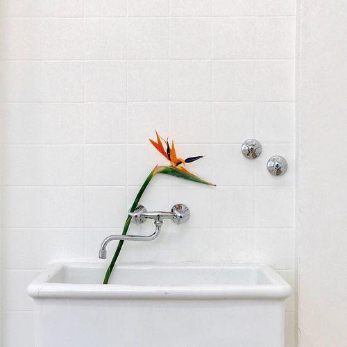 Flower on bathtub