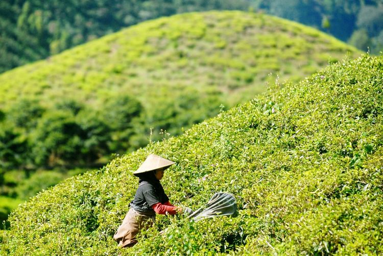 Capturing Freedom Tea farmer Urban Landscape Humaninterest