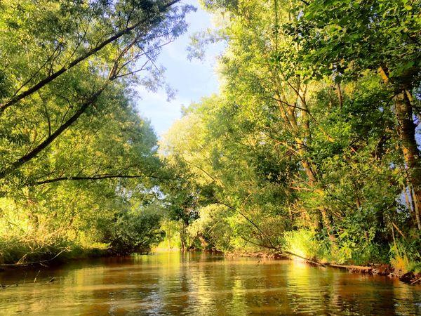 Flusslandschaft alte Elz  River River View