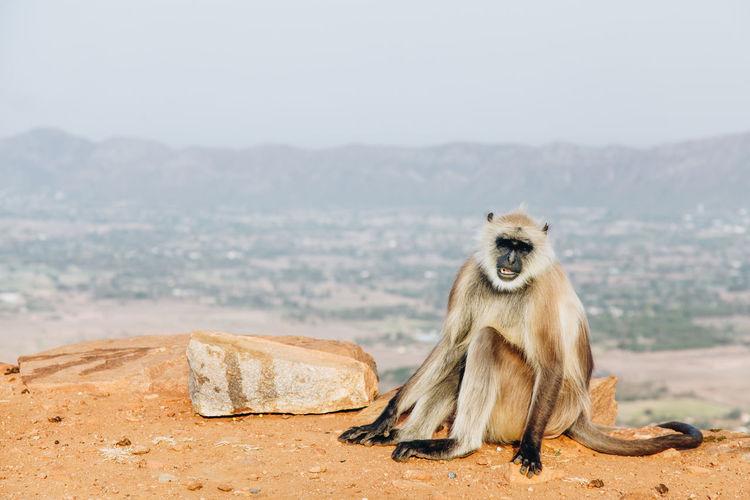 Portrait of monkey sitting against landscape