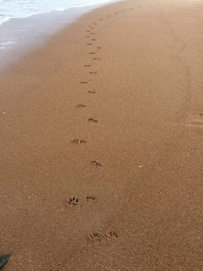 Waves, Ocean, Nature Dog Tracks Paw Prints Fleeting Seaside Blue Sea Seaside_collection Dog Walking Blyth Beach Daily Life Sunny Day Picnic Beach Photography Beach Surf's Up Sand Great Day Out Seaton Sluce