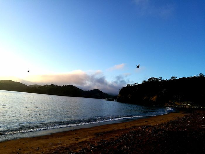 Flying Beach Nature Bird Silhouette Beauty In Nature Sky One Animal Outdoors Sunset Scenics Landscape Animal Themes Fresh On The EyeEm The Week On Eyem Ladyphotographerofthemonth Helena Bay Whangarei In New Zealand