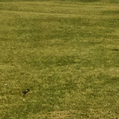 Pichon Tero Golf Lasyungas