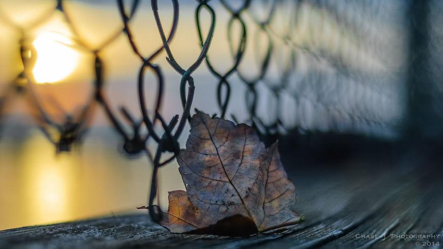 Leaf Sunrise Fence