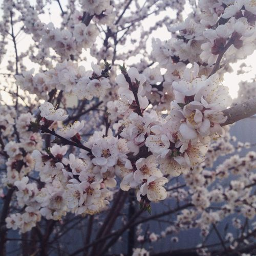 First Eyeem Photo Spring Nature