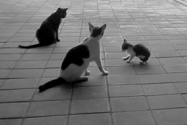 Animal Themes Domestic Animals Cat Togetherness Feline Pets Vertebrate Domestic Cat Zoology Paving Stone Whisker Mammal Day Animal Footpath No People Cats Of EyeEm Catsagram Cute Cats Cat Lovers Cute Pets Cuteanimals Couple Cat♡ Kucing