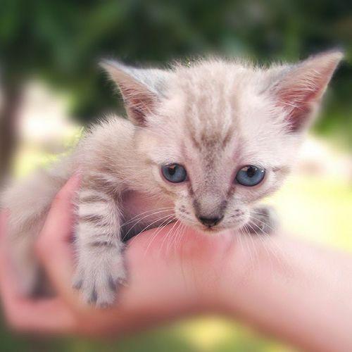 Kat Phisi Katze Kitt Katu Gatu Gat Kočka Mio Kotsur Gato Chat Mbarakaja Macska Cat Gatto Neko Cattus Katt Pishi Kot Michi Koshka Kedi