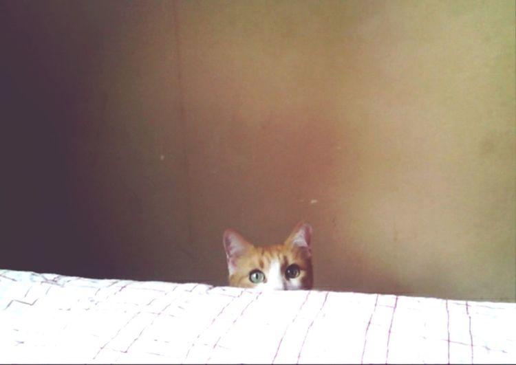 Засада кот