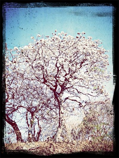 Nice Tree