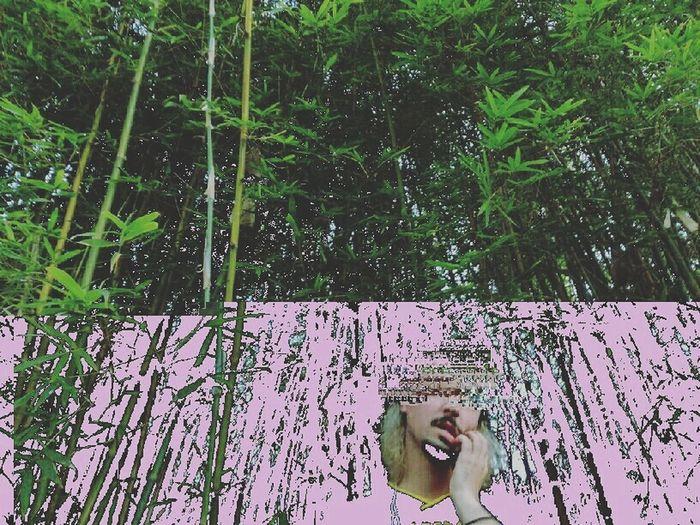 Glitch Glitchart Glitchphotography Glitch! Glitched Bamboo Grove Woods Pink Green Nature First Eyeem Photo EyeEmNewHere