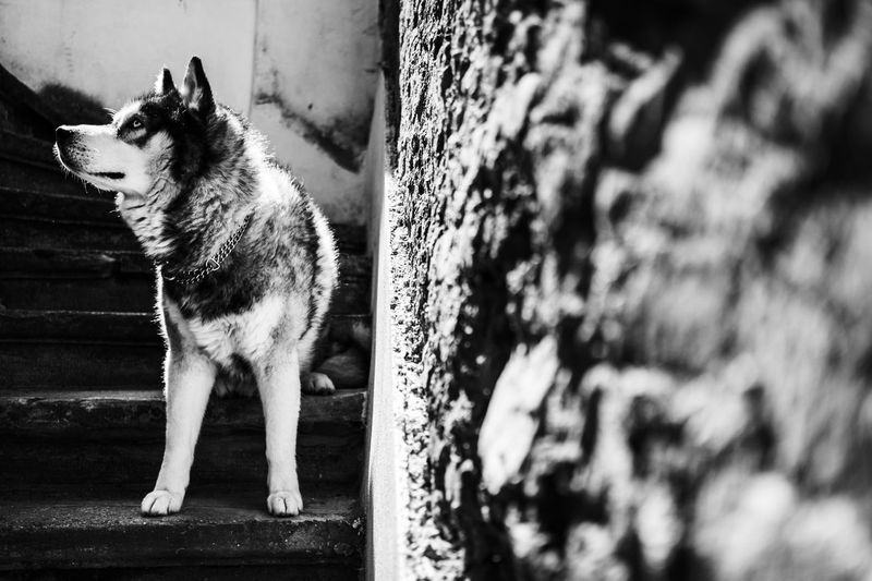 Dog looking away against wall