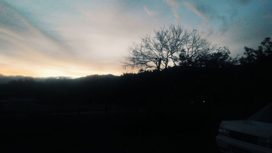 Caroling! Tree Cloud - Sky Sunset Sabah Borneo Caroling ⚡ Borneo First Eyeem Photo Ready For Christmas! !
