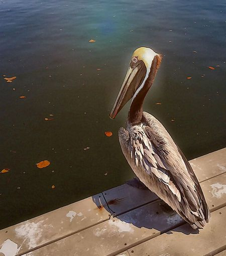 EyeEm Birds Pelican Icolorama Bird Birds Birds Of EyeEm