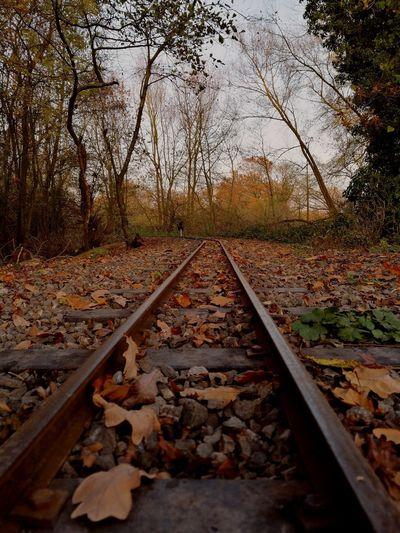 Small train rails Tree Leaf Railroad Track Autumn Rail Transportation Railroad Tie Sky Parallel Empty Road Straight Dry Railway Track Long Gravel