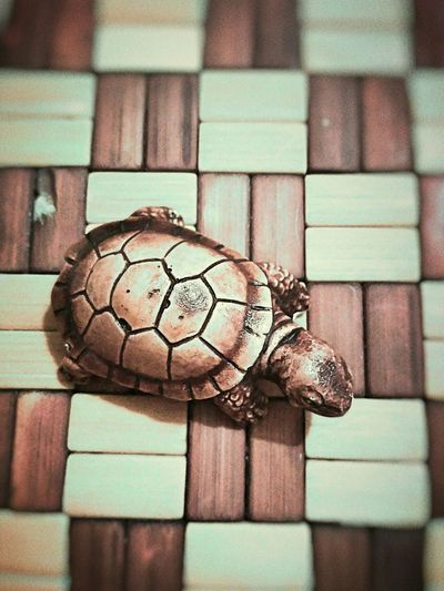 Turtle Animal Themes First Eyeem Photo